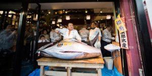 Seekor Ikan Tuna Terjual Rp 8,5 Miliar dalam Lelang di Tokyo